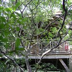 Our secluded treehouse.