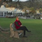 Sitting under the ancient Pohutukawa Tree with hotel behind