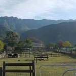 Foto de Oaksrest Vineyards Guest Farm