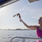Birds playing with us on our boat