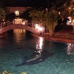 Meandering pool at night