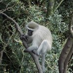 Monkeyland Primate Sanctuary Foto