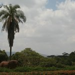 Looking towards the Ngong Hills