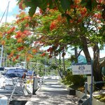Photo de Nanny Cay Marina & Hotel