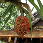 Photo of Arcadia Phu Quoc Resort