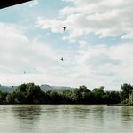 Swallows under the Green River bridge