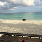 Foto van Pigeon Cay Beach Club
