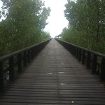 the bridge around mangrove