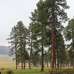 Valles Caldera view on tour