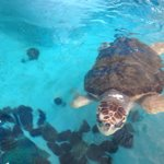 Sea turtles were awesome too!