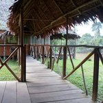 Bilde fra Amazon Camp lodge