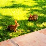 Bunnies near the Oak Grill restaurant