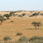 Photo de Tswalu Kalahari Reserve