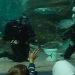 SCUBA with sharks @ National Aquarium