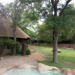 Foto van Motswari Private Game Reserve