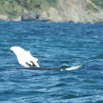 One of the many humpbacks we saw