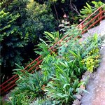 Calibishie Cove Dominica - Gardens