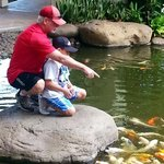 Feeding the koi after breakfast.