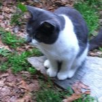 Sweet Gizmo Kitty (visited in the yard or porch; very well behaved)