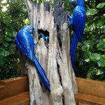 Blue Macaw Decoration