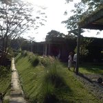 the path to rice field / pool