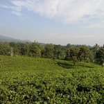 Tea Garden Resort Bandung의 사진