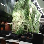 The living wall in the dining area, very impressive