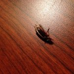 Bugs, not the kinda thing I want to see at a hotel!