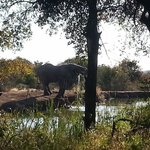 Φωτογραφία: Black Rhino Game Lodge