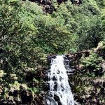Waimea Valley Foto