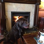 Dog friendly afternoon tea in the lounge!