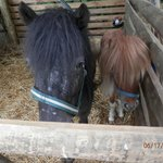 Mini Horses on Property-So Cute!
