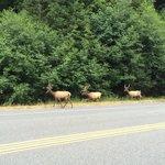 Elk a few miles down the road from campground. Kids were so excited.