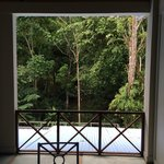 Gorgeous views of the rainforest from our balcony