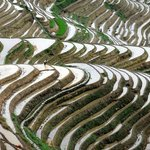 Dragon's Backbone Rice Terraces Foto