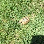 baby tortoise in the grounds