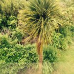 Palm tree out side Oor window cool