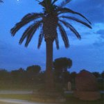 Palm in night