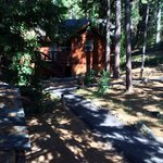 Evergreen Lodge at Yosemite照片