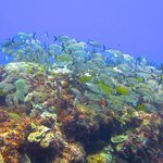 Cancun Reef Diving
