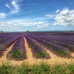 Photo de Une Campagne en Provence