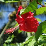 Photo de Pension Hibiscus