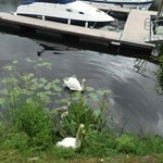Marina with fab swan family