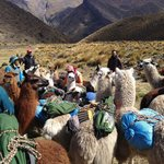 Foto Llama Pack Backpacker