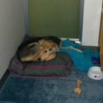 Dog enjoying Aloft comforts