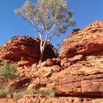 Kings Canyon Wilderness Lodge照片