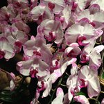 Beautiful orchid display