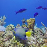 Foto de Hamanasi Adventure and Dive Resort