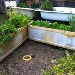 Yes a kitchen garden too.