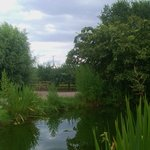 Foto Green Orchard